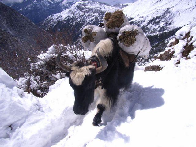 Himalaje Khumbu Everest trekking 065