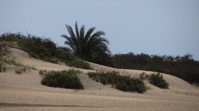 Gran Canaria Pazdziernik 2012 (2)