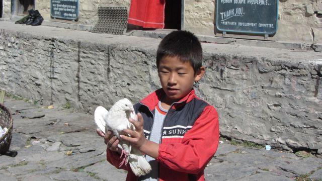 Himalaje 2013.10 Annapurna trek 218
