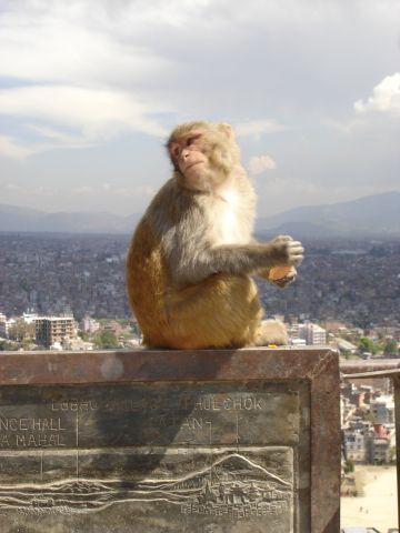 Swayambhunath (7).JPG